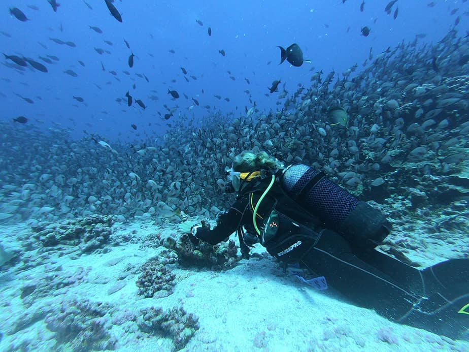 scuba with school of fish