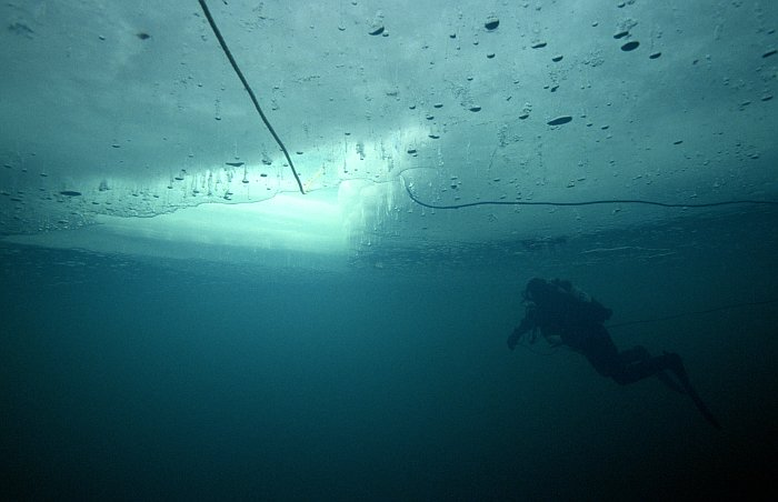 diving under ice floe