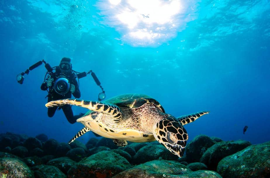 underwater photography or videography