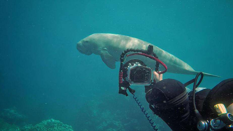 don't let camera rule the dive