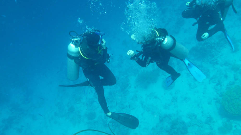 stay with dive buddy